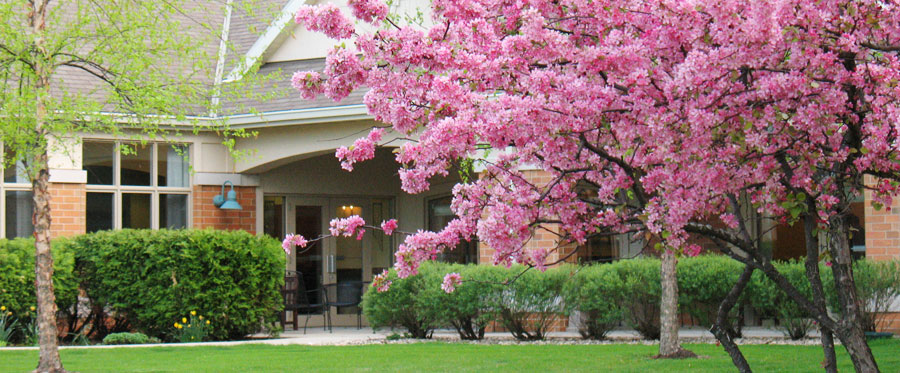 pink blossoms in front of Attic Angel Community